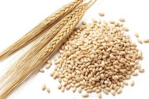 bulk-barley