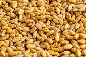 bulk-wheat
